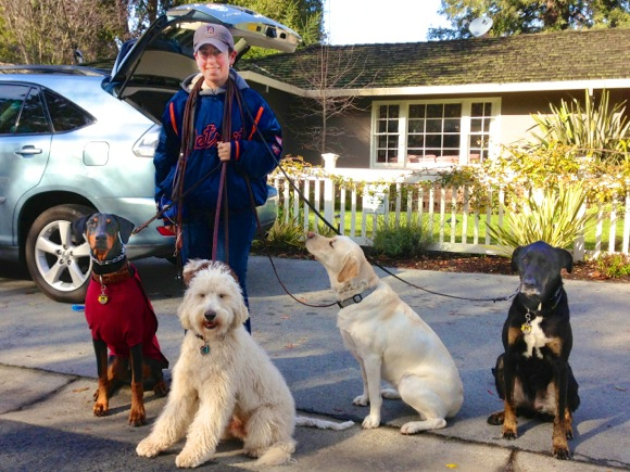 dog walker Colt Rosenweig in Menlo Park