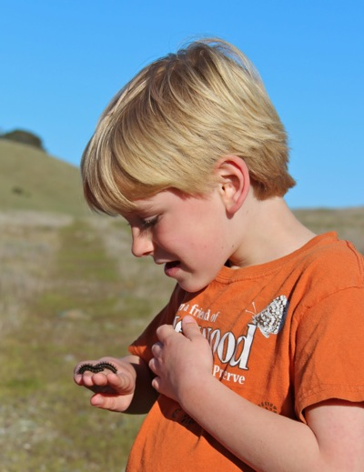Stuart Weiss works to re-introduce the Bay Checkerspot Butterfly to Edgewood Park
