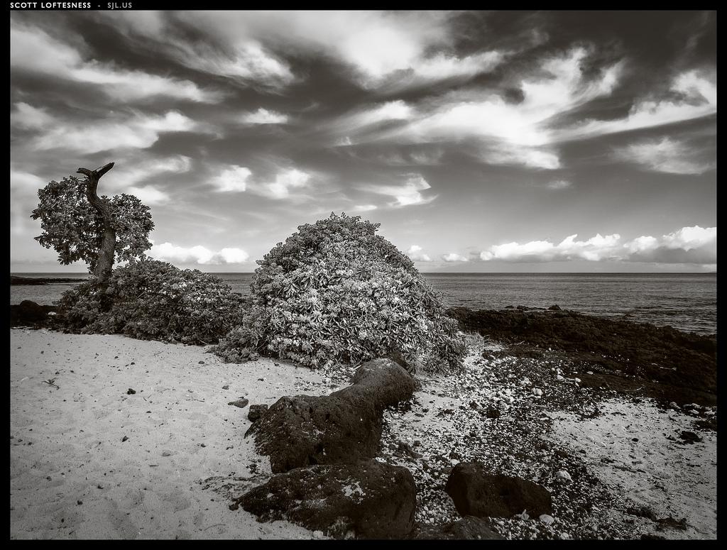 Beach and Tree - Hawaii - 2013