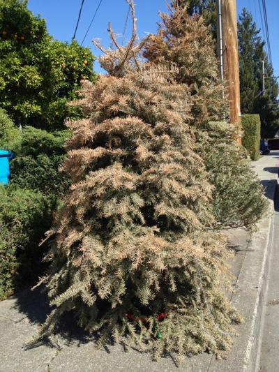 Post image for Spotted: Spring cleaning = time to get rid of the Christmas tree!