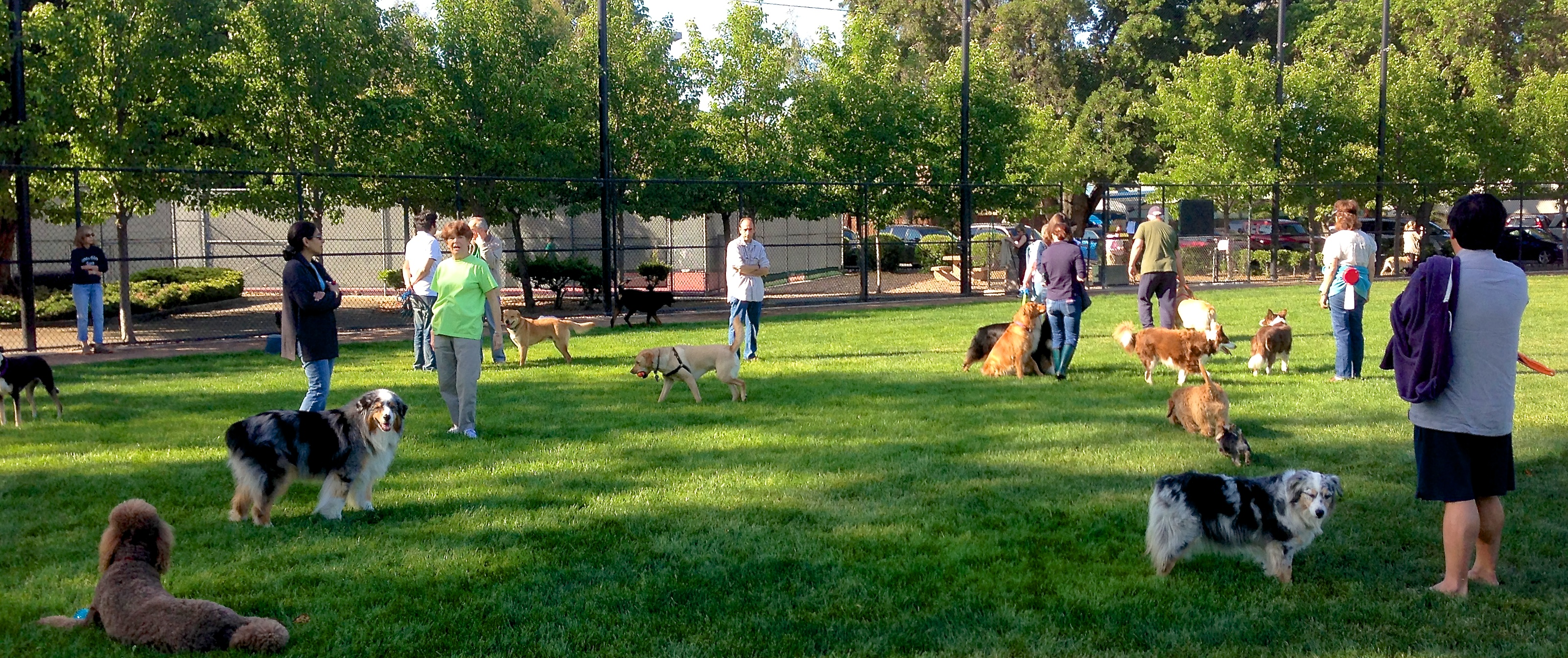 off leash dog park at Nealon Park in Menlo Park