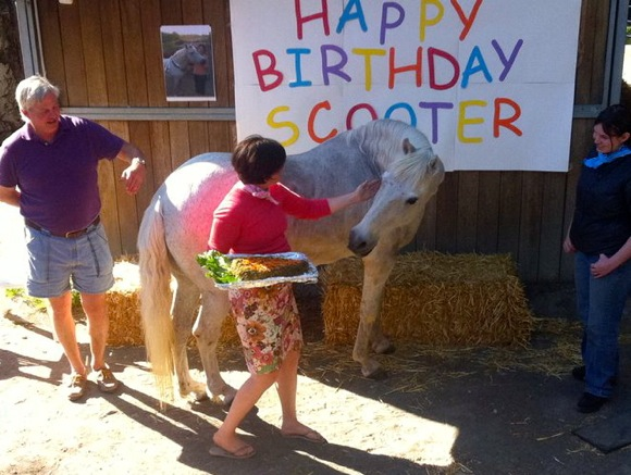 "Wilson Farrar says ""Happy Birthday"" to her horse, Scooter, with a party"