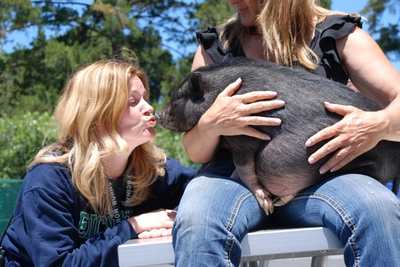 With fundraising goal exceeded, Encinal School principal kisses a pig