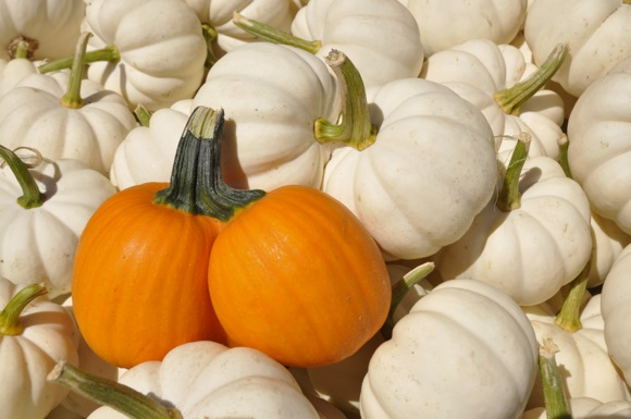 Mini pumpkins for sale at Webb Ranch