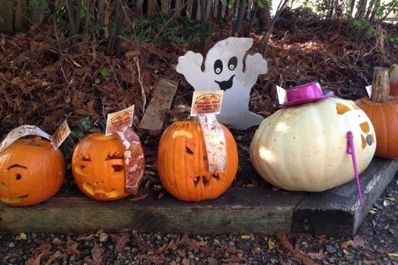 Princesses pumpkins all on display at