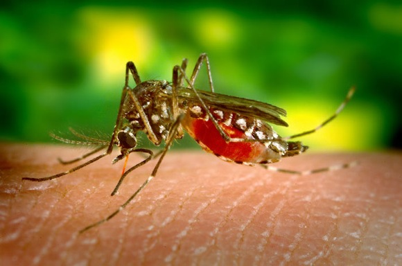 Mosquito fogging in industrial areas of northeast Menlo Park scheduled for Tuesday, Sept. 2nd