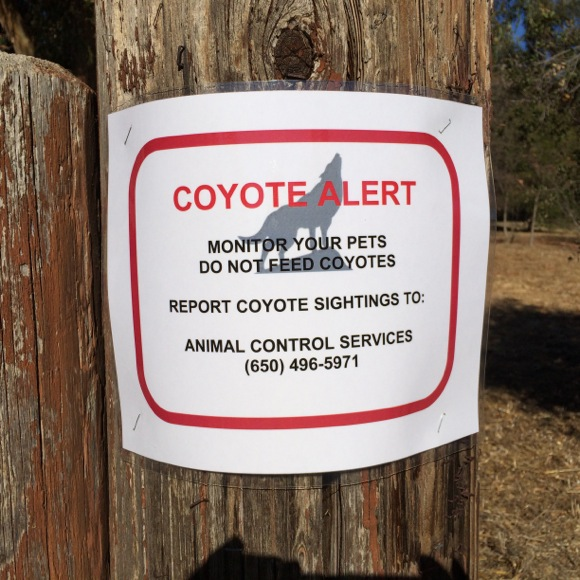Post image for Spotted: Please don't feed the coyotes! Really?