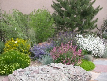 Post image for Free water-efficient landscaping class to be held on March 8 in Menlo Park