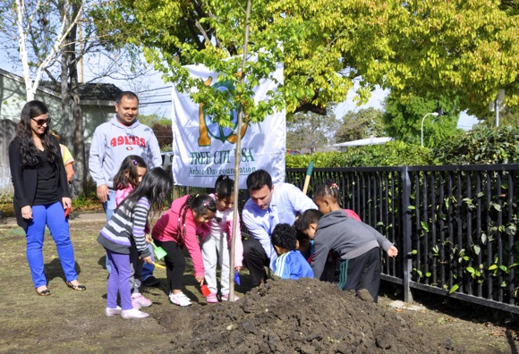 Arbor Day tree planting in Menlo Park in April, 2014