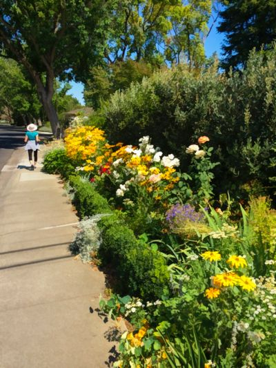 """An iPhone is handy camera to have for """"July-ing"""" around Menlo Park"""