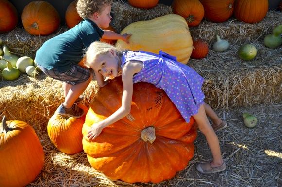Grace draped over pumpkin_hori