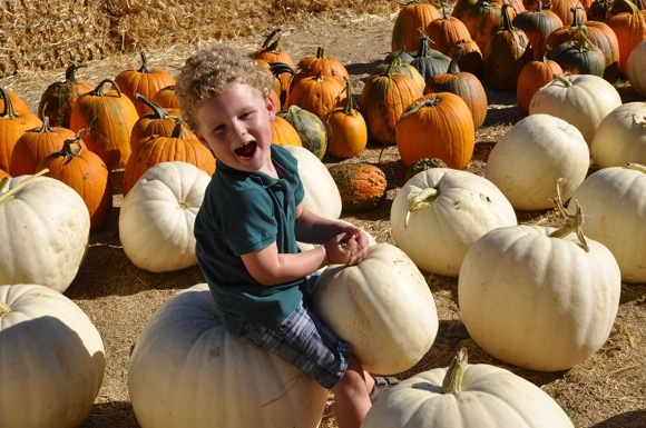 youngster on Pumpkin at Webb Ranch Pumpkin Patch
