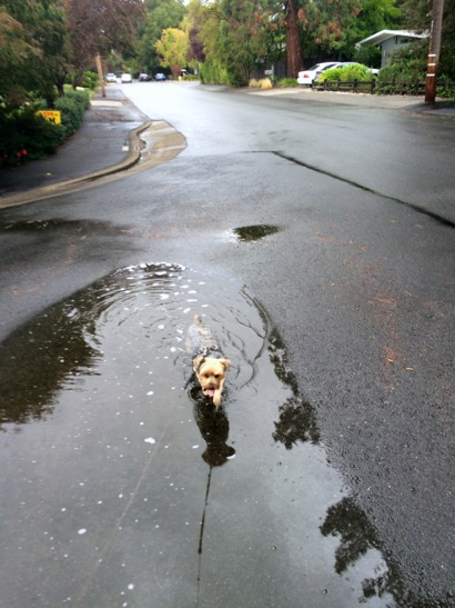 Post image for Another wimpy day of rain in Menlo Park