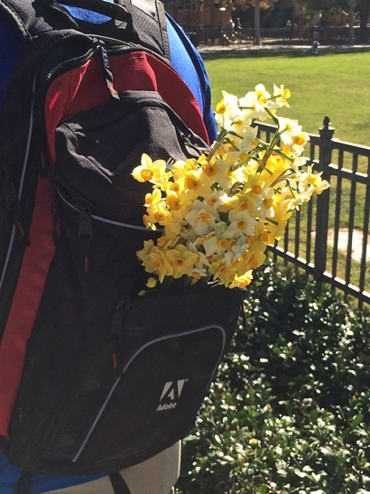 Post image for Spotted: Sweet smelling narcissus from the Menlo Park Farmers Market