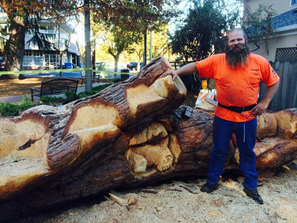 Italian stone pine in Fremont Park gives birth to art & play structure – with new trees to come