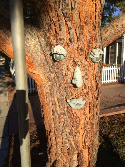 Spotted: Tree with a happy face in west Menlo Park