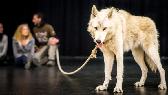 Post image for A wolf comes calling at Hillview School in Menlo Park