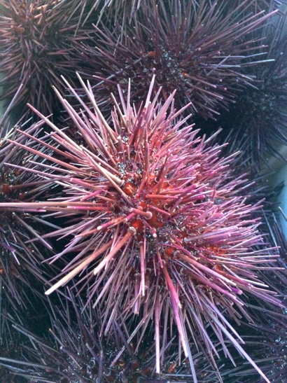 Post image for Sea urchins are the stars at today's Menlo Park Farmers' Market