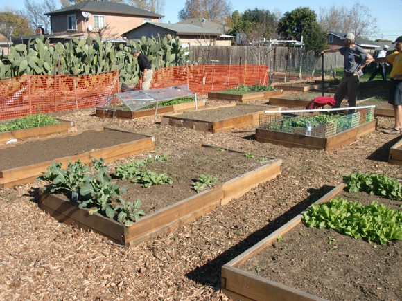 Post image for Phase 2 of Rotary Club of Menlo Park's Belle Haven Community Garden to begin with help of Facebook