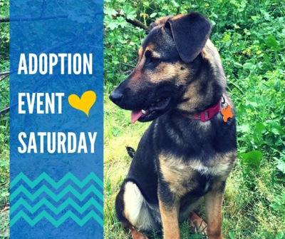 Post image for Adopt a Copper's Dream rescue dog in Menlo Park on Saturday, March 21
