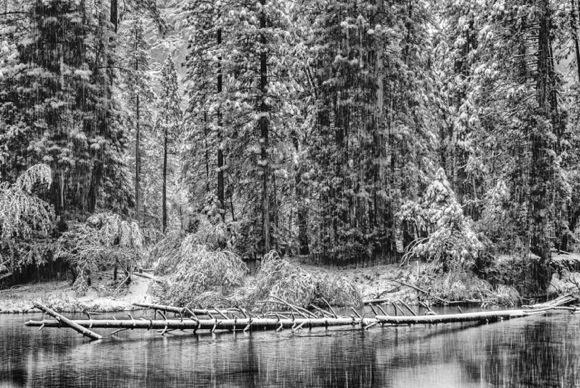 snowy log_Irene