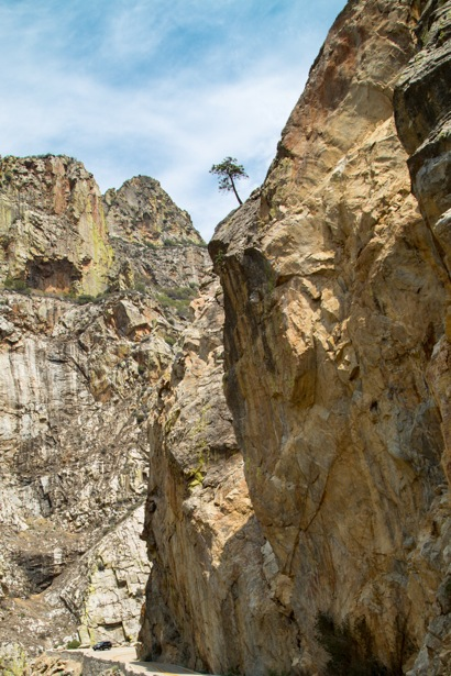 A lone tree perches on a cliff at Kings Canton National Park in Califonia.