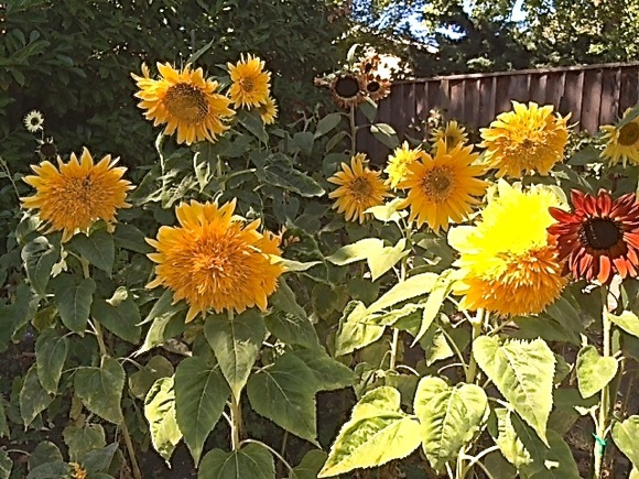 Learn about growing flowers to brighten your garden on July 1