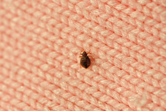 Post image for Menlo Park Library closed due to discovery of a bedbug