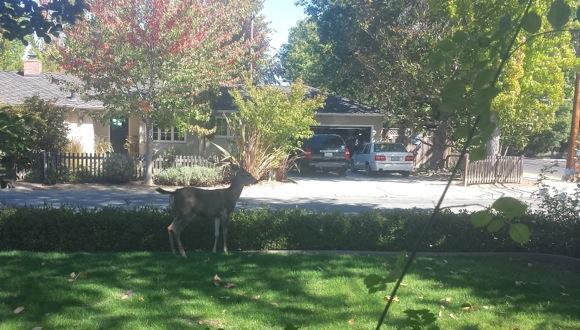 deer_bottom