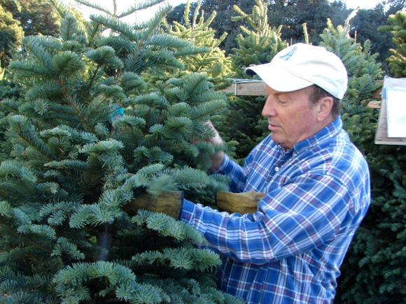 Post image for Kiwanis Club of Menlo Park's Christmas tree lot is open on the Stanford campus