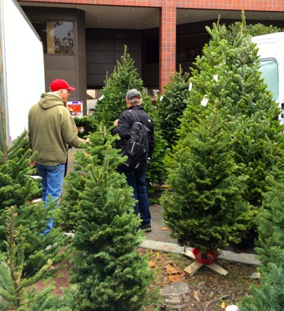 Post image for Spotted: Cozzolino Christmas trees at Menlo Park Farmers Market