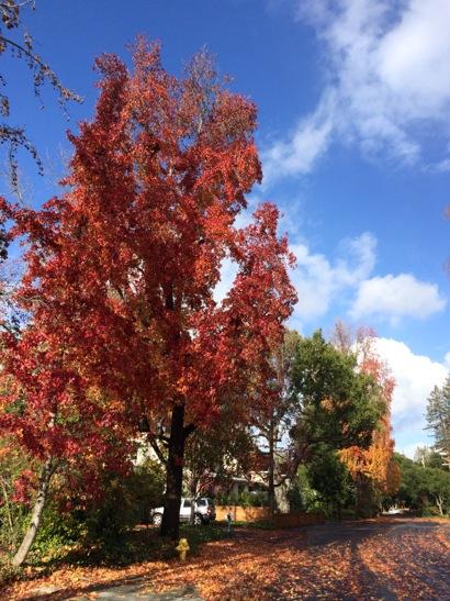 blue skies after rain_Dec13