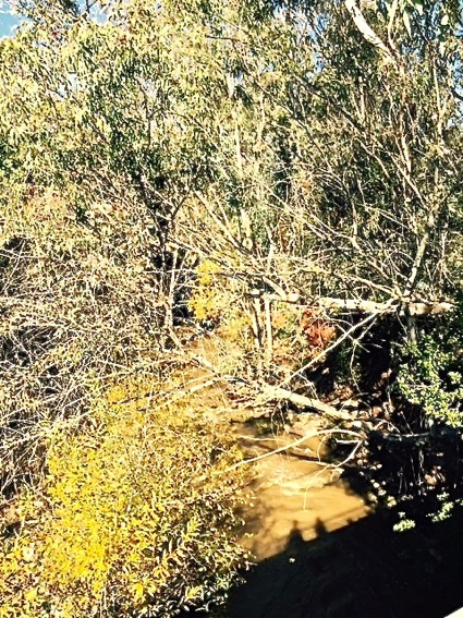 Post image for Spotted: Rushing water in San Francisquito Creek
