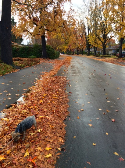 Post image for Rain of leaves and moisture overnight in Menlo Park