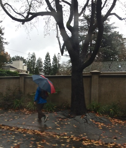 Post image for Drizzle makes for a soggy Tuesday morning in Menlo Park