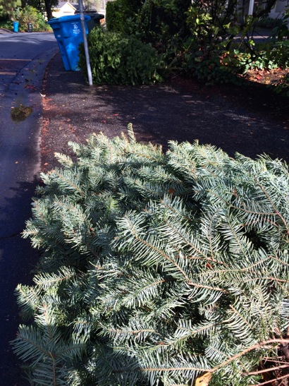 Post image for Wonder why your Christmas tree hasn't been picked up? Here are some clues