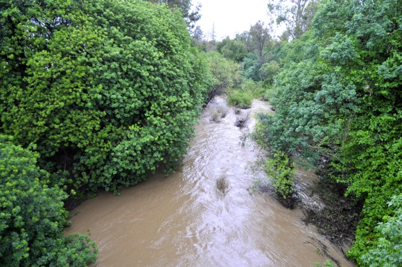 Post image for No doubt – San Francisquito Creek is rushing!