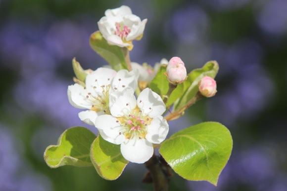 Filoli flowers herald Happy Spring!