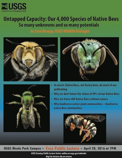 Post image for USGS public lecture looks at 4,000 species of bees