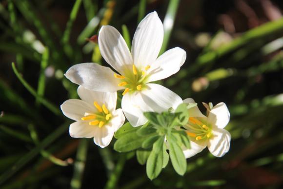 hori-of-close-up-flower