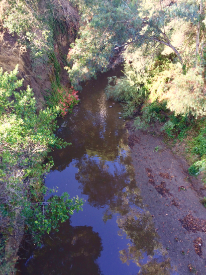 Post image for Spotted: San Francisquito Creek flowing again