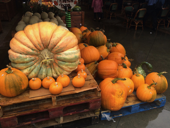 Post image for Spotted: Great looking pumpkins at Bianchini's