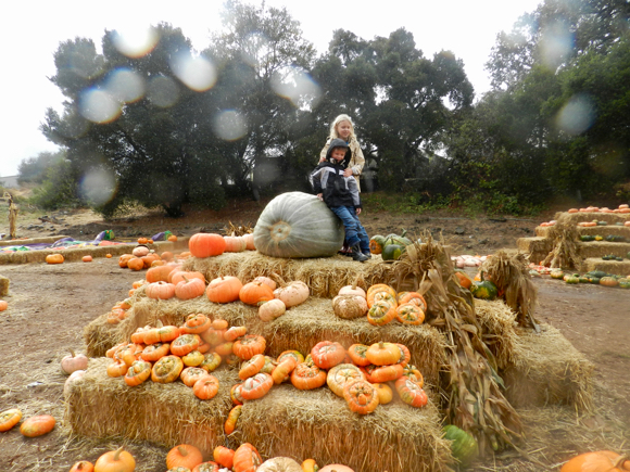 Post image for It's a blustery, rainy day at Webb Ranch Pumpkin Patch