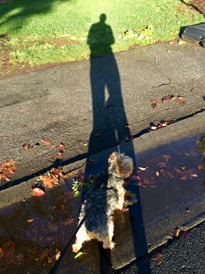 Post image for Rain leaves lots of puddles for splashing in the sunshine