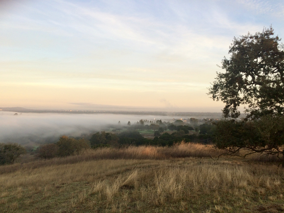 Post image for Spotted: Tule fog descending over Menlo Park