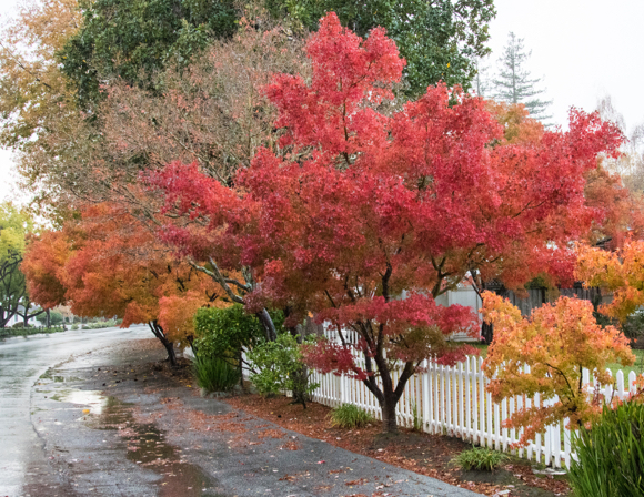 Rain catches Menlo Park by surprise this afternoon