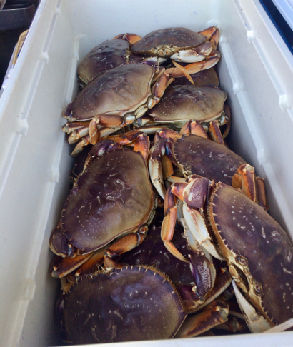 Post image for Spotted: Live crab at the Menlo Park Farmers Market