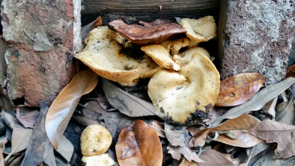 mushrooms-with-leaves-by-eric-1