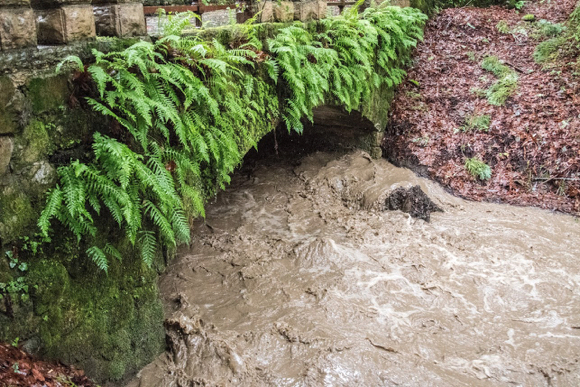 Post image for Lots of rain means roaring creek along Alpine Road