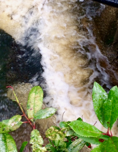Spotted: Whirling, swirling Atherton Channel near Los Lomitas School